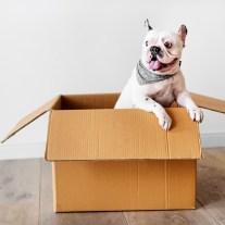Hund in Umzugskarton. Diese soll nicht als Umzugsgut im Karton gepackt werden.