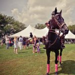 Scene from the 2015 polo event