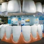 A fresh angle on teaching dental health … from inside the mouth