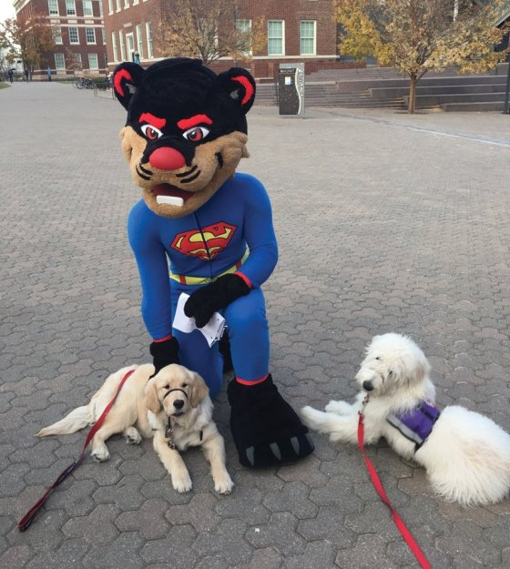 UC's Bearcat mascot with Fergie and Dalek