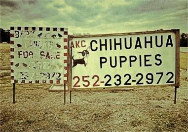 Puppies & Chicks