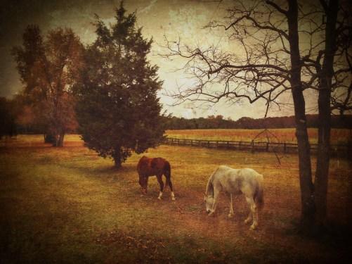 Ending Days of Autumn