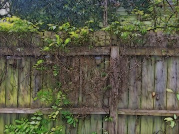 Old Fence, New Blooms