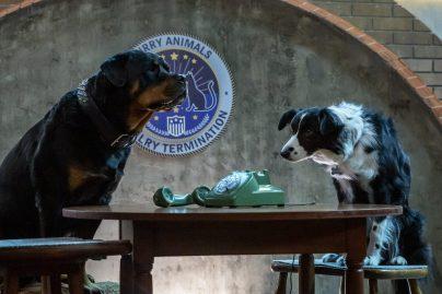 Cats & Dogs 3: 01-08-20, Unit Day 03 Photo Credit: Ryan Plummer/2020 Warner Bros. Entertainment Inc.