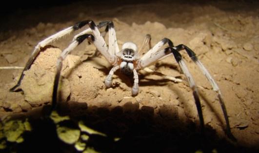 pre-CGI-Arachnophobia-590x350