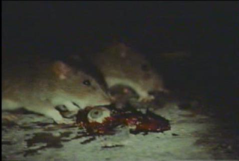 mind-ripper-1995-rats