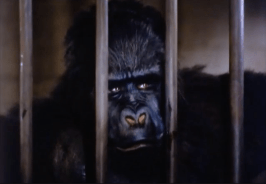 Phantom-of-the-Rue-Morgue-1954-gorilla-Charles-Gemora