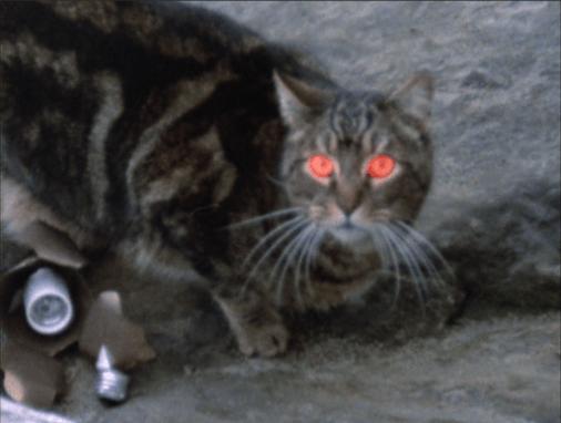 Amityville-escapes-cat