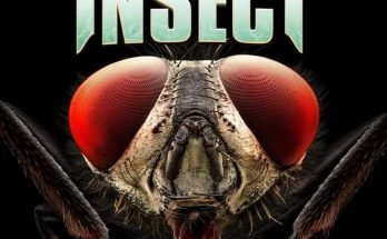 Insect-Killer-Mosquitos-movie-film-comedy-horror-Italianreview-reviews-2018