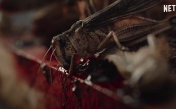 The-Swarm-movie-film-horror-locusts-2020-French-La-nuée-La-nube-locust-Netflix-review-reviews