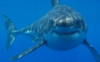 Shark-Zone-movie-film-action-horror-2003-review-reviews-sharksploitation