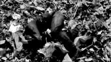 Hero lying dead in a rubbish heap