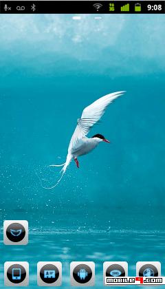 artic tern bird