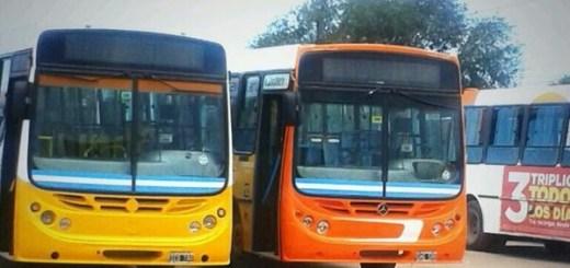 colectivos municipalidad ciudad de cordoba transporte autobus omnibus