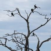 Birds in tree - Rotorua