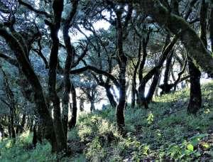 CuatroPalos Wald - Wald um den View Point Quatro Palos in der Sierra Gorda