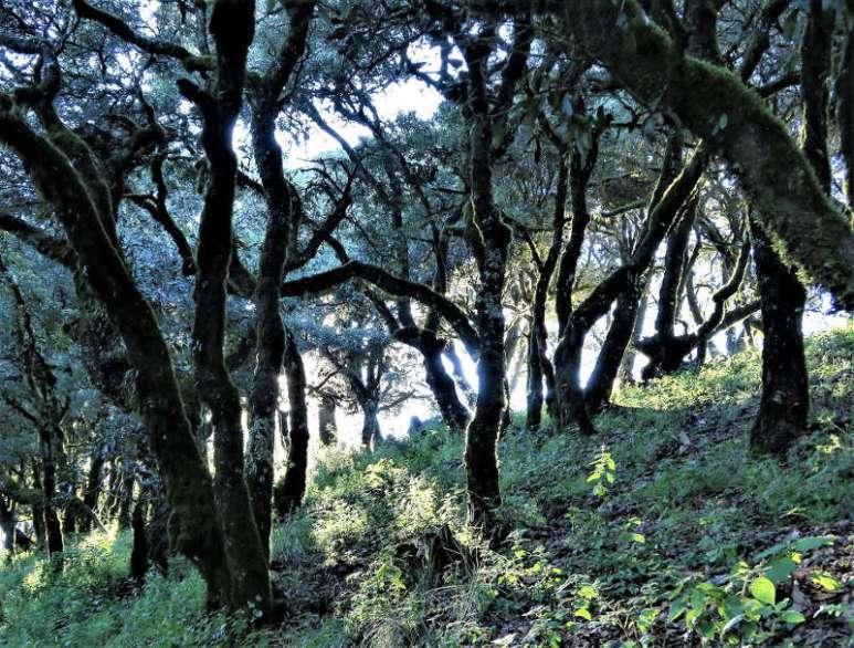 CuatroPalos Wald - Die Sierra Gorda - Das grüne Juwel im Herzen Mexikos