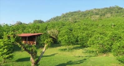 Orangenfeld web - Veracruz - Auf den Spuren der Vanille in Papantla