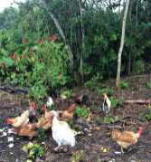 Xanath Huehner web - Veracruz - Auf den Spuren der Vanille in Papantla
