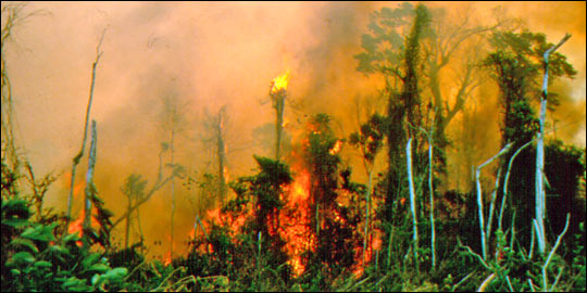 The Amazon burning