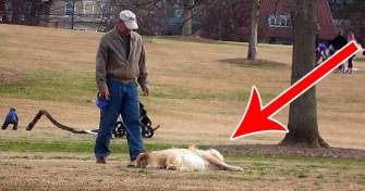 Quelqu'un a filmé le chien le plus têtu du monde… Hilarant !