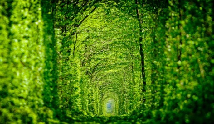 Le Tunnel de l'Amour, Klevan, Ukraine 1