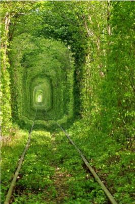 Le Tunnel de l'Amour, Klevan, Ukraine 2