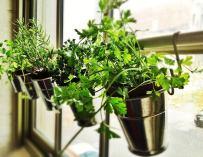 Cultiver des herbes aromatiques chez soi