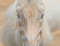 Ils sont rares et magiques… Ce sont les animaux albinos !
