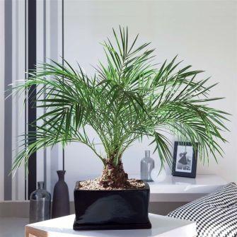 Pour assainir l'air de votre maison, pensez aux plantes dépolluantes