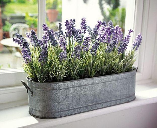 des plantes r pulsives anti moustiques moving tahiti. Black Bedroom Furniture Sets. Home Design Ideas