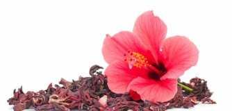 Toutes les vertus de la fleur d'hibiscus