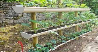 Un potager dans votre jardin