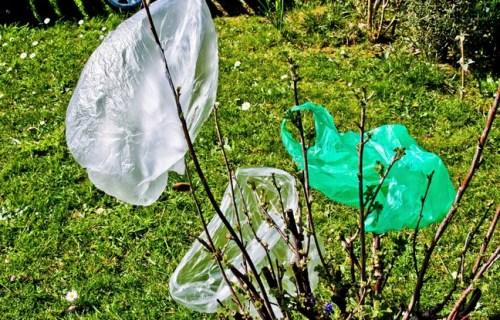 Pollution fin des sacs plastique usage unique depuis for Arbuste plastique