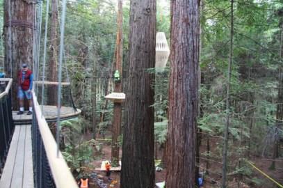 redwoods-nightlights-9-tt-width-620-height-411-lazyload-0-crop-1-bgcolor-000000-except_gif-1-qazy-1-nolayzr-1