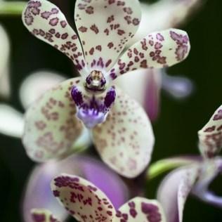 orchidée-rare-des-fleurs-qui-ressemblent-à-quelque-chose-dautre