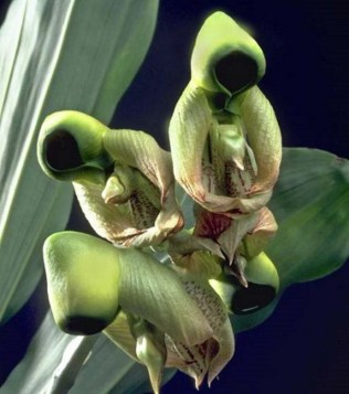 orchidée-rare-des-hommes-emballés-dans-leurs-habits
