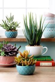 plantes-grasses-dintérieur-assiettes-géométriques-et-livres