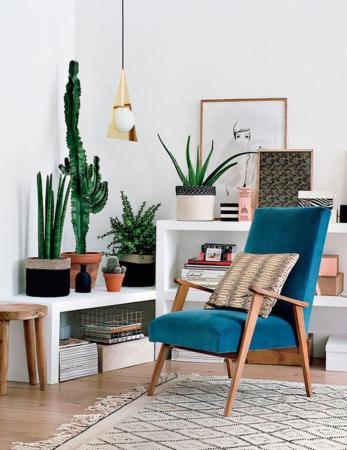 plantes-grasses-dintérieur-cactées-et-succulentes-chaise-scandinave-étagère-blanche