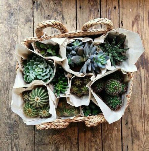 plantes-grasses-dintérieur-corbeille-avec-cactus