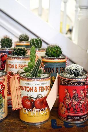 plantes-grasses-dintérieur-élever-des-cactus-en-conserves
