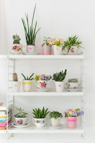 plantes-grasses-dintérieur-étagère-blanche-plantes-succulentes