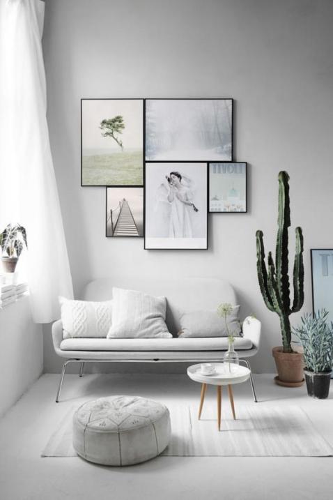 plantes-grasses-dintérieur-jolie-cactée-dans-une-pièce-monochromatique