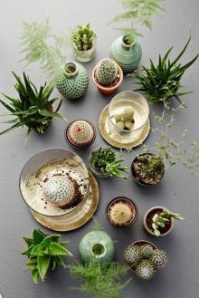 plantes-grasses-dintérieur-le-cactus-la-petite-déco-précieuse