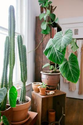 plantes-grasses-dintérieur-pots-en-argile-et-céramique-décorer-avec-cactées
