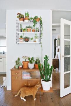 plantes-grasses-dintérieur-rangement-de-cactus-sur-étagère