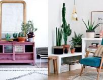 Les plantes grasses pour décorer votre intérieur