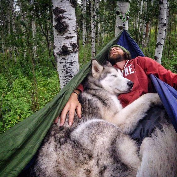 Les chiens sentiraient les gens de confiance… Et les autres !