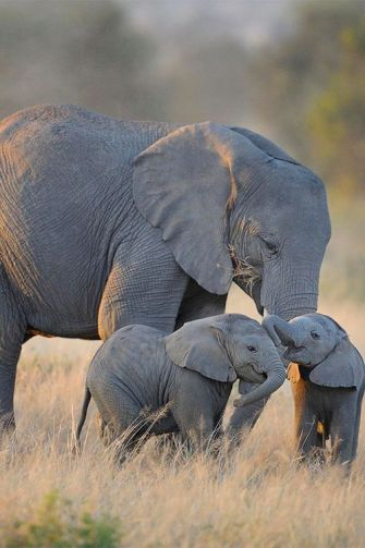 C'est prouvé, les documentaires animaliers nous rendent heureux !