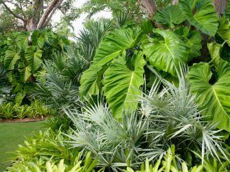 Comment protéger ses plantes des intempéries ?